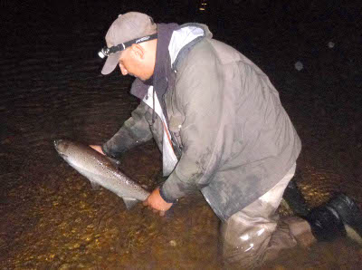 A good August sewin from the Golden Grove beat is returned to the Towy.