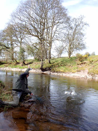 Playing a good brown on the Trallong & Abercamlais beat of the Usk.