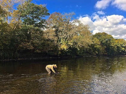 Martin Bowler releasing a grayling on the upper Wye