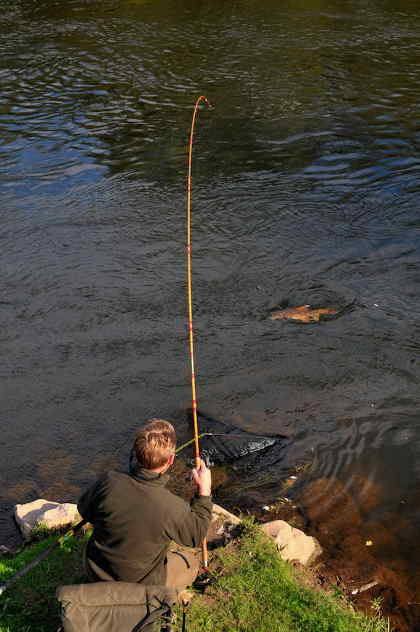 Playing a good Wye barbel in September