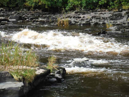 Higher water on the upper Wye in September carried a darker stain