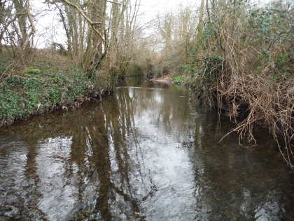 Stalking trout on the Bideford Brook in March