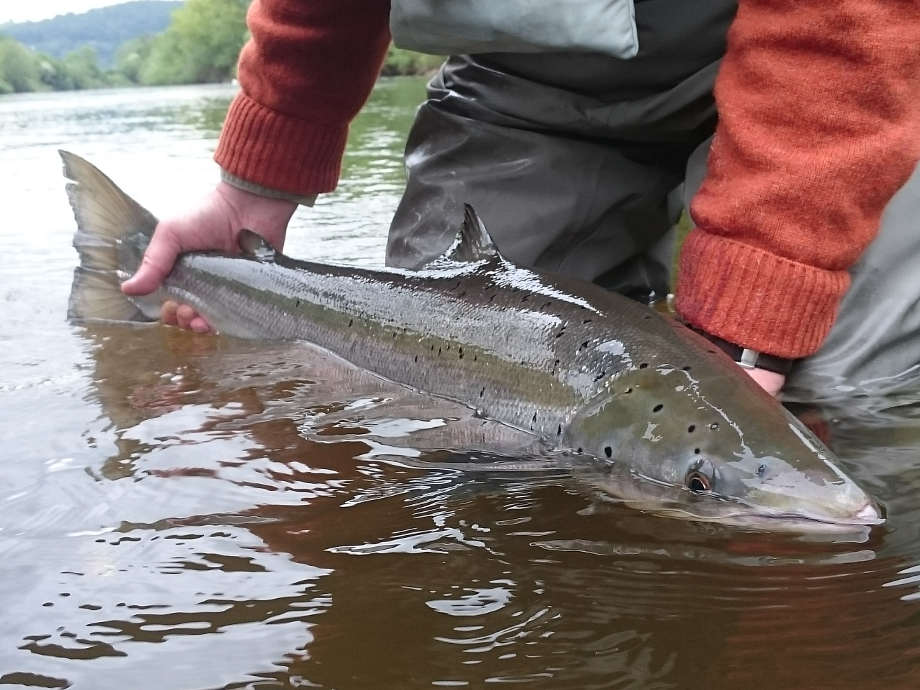 A 15lb salmon from the Goodrich Court beat in May