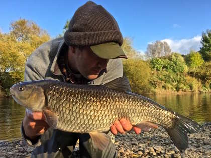 A good autumn chub from the Wye