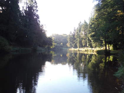 Forest of Dean syndicate lake