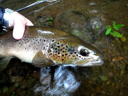 252752299 Abbeydore Court trout 18 inch trout taken on the River Tarrell by CT of  Cardiff ...