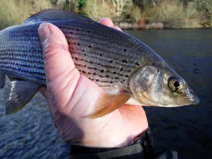 ec58b91fa Edw Valley at Hundred House Cold Weather Grayling ...