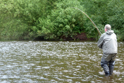 Richard Kingston into a June fish on the middle/lower Usk.