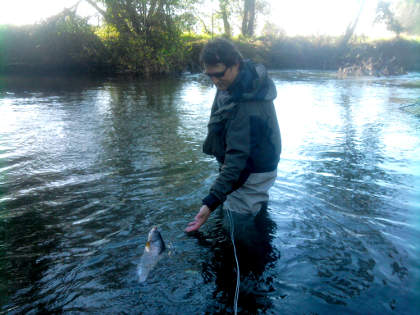 A good winter grayling comes to hand on the Eyton beat of the river Lugg