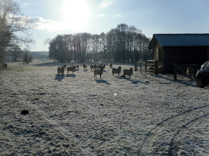 A frosty morning by the hut at Mortimers Cross (Lugg).